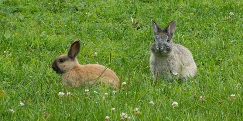two rabbits on grass